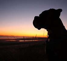 Boxer at Sunset on Sand by roskolewis