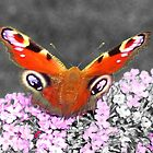 Butterfly - Selective colour  by BeckiBee