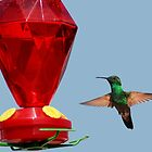 Hummingbird ... Lunch Time2 by MaluC