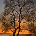 Sunset's Golden Silence by photoescapist