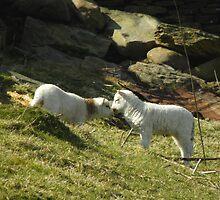 I Love ewe .. by rhian mountjoy