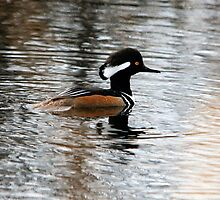 Hooded Merganser by Vickie Emms
