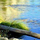 """River Grass"" by Lynn Bawden"