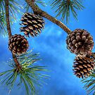 BLUE SKY AND PINE CONES by MIKESANDY