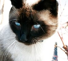 Fiti Cat by MauroMartins