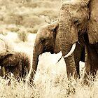 Elephant Family by Brendan Buckley