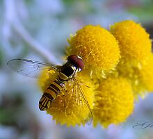 """""""To BEE or not to BEE"""" by Gail Jones"""