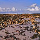 Fenit Island rocky beach scape by Paul Woods