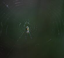 Orchard Orbweaver by Sazzyshortness