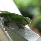 New Seating Arrangements-Tropical Lizards in TN by JeffeeArt4u