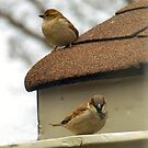 Sparrows by Barry W  King