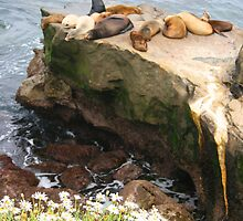 Seals Sleeping...Except for One Sunning!! by heatherfriedman