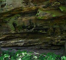 Stinging nettles by harold1066