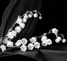 Lily of the Valley by Claudia Kuhn