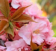 Ornamental cherry cluster by pogomcl