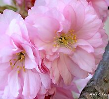 Two cherry blossoms by pogomcl