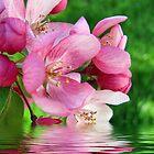 Spring Reflections by Sviatlana