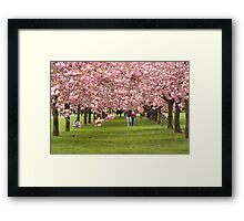 Love and Cherry Blossoms Framed Print