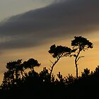 Two Pines by Alison Malcolm Flower