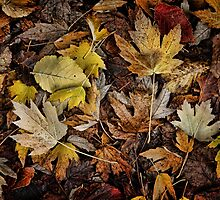 Autumn Colours by Barb Leopold