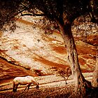 Olive Tree Valley by Mal Bray