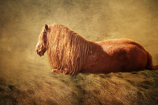 North Road Horse Reclining by isabelleann