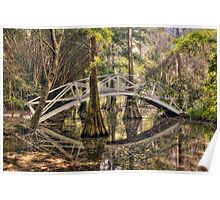 Cypress Swamp - Magnolia Plantation and Gardens Poster