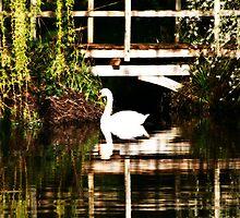 Impressionist Swan by lallymac