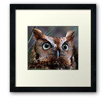 A Screech Owl Named Lana Framed Print