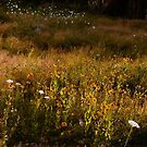 Morning Meadow In Maine by mooselandtours
