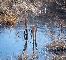 Two Reed in a Pond by Krista Corner