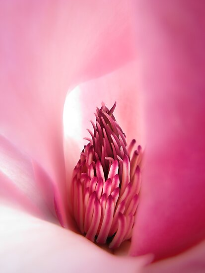 Fragrant Pink by John Poon