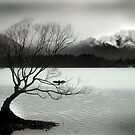 Wanaka by Craig Mitchell