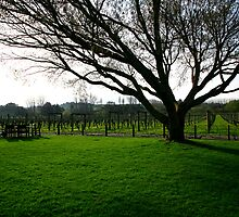 Neudorf Winery New Zealand by Graeme Buckland