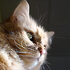 Puddy Cat's Thoughtful Look by Ryan Conners