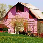 Pink barn by David Owens