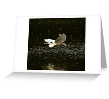 Great White Egret Fly By Greeting Card