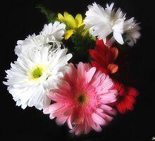 Gerbera Daisy 9 by Christopher Johnson