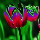 Tulip in a Whole Different Light # 1 by Jennifer Hulbert-Hortman