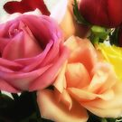 Mixed Cut Roses 3 by Christopher Johnson