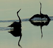 The Mating Dance of Blue Herons by Ruth Lambert