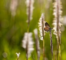 intelligent butterfly by Dinni H