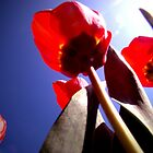 Red Tulips in the Sun by shutterbugg73