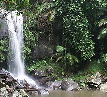 Curtis Falls - Tamborine Mountain, Queensland, Australia by Nathan Lam