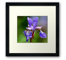 Wet and Windy Framed Print