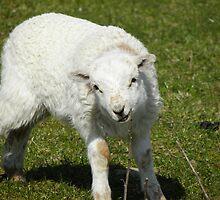 Who ewe looking at ?! by rhian mountjoy