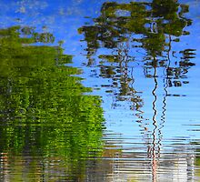 Pond-Err by Joni  Rae