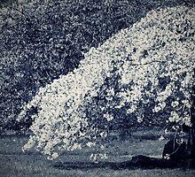 Blossom Dreams by Stephanie Hillson