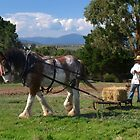 Clydesdale Horse working, Gulf Station, Vic., Australia by Bev Pascoe