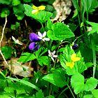 Spring Boquet_Shenk's Ferry Wildflower Preserve by Hope Ledebur